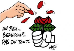 Rose-du-Parti-socialiste